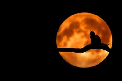 lune du tarot